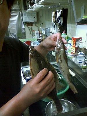 0909釣った魚1.jpg
